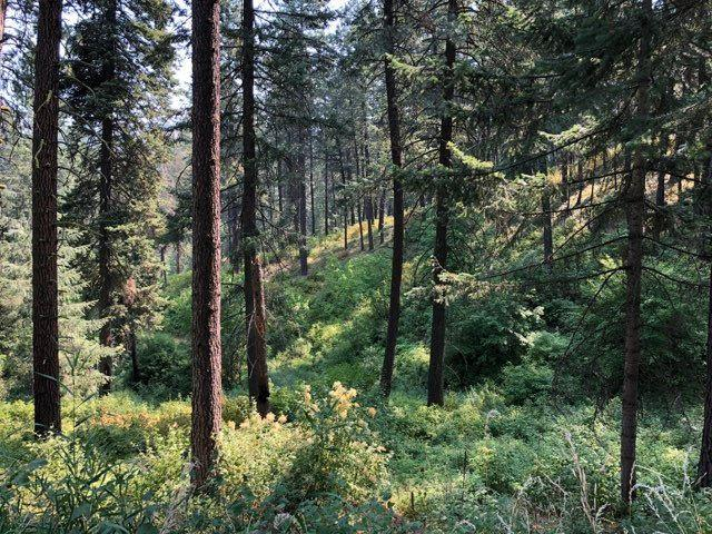 NNA Fir Dr, Moscow, ID 83843 (MLS #98702762) :: Juniper Realty Group