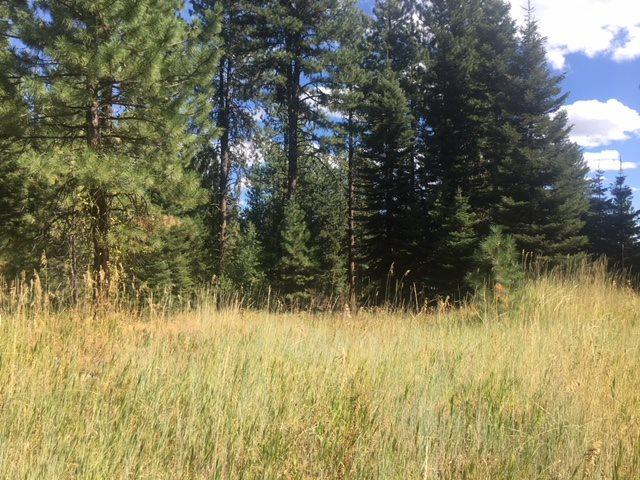 1120 Crescent Rim Drive, Mccall, ID 83638 (MLS #98706935) :: Zuber Group