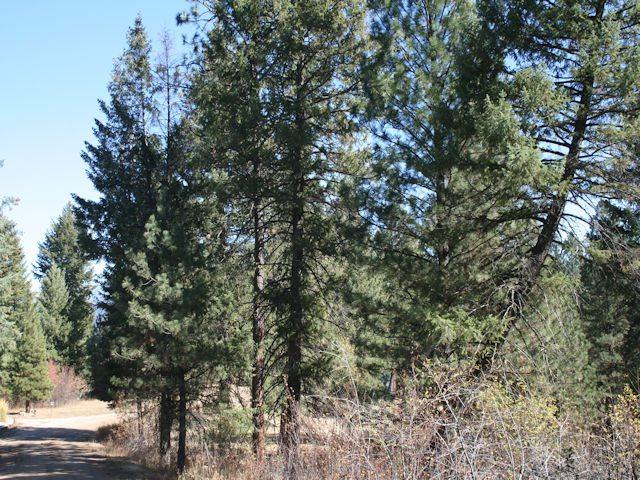 Lot 18 Skyridge, Garden Valley, ID 83622 (MLS #98710695) :: Jackie Rudolph Real Estate