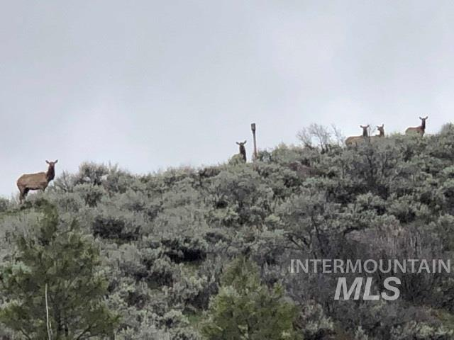 Lot 25 Whitehawk Way, Boise, ID 83716 (MLS #98725751) :: New View Team