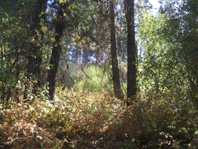 Lot 11 Boise Holcomb Sub 2, Boise, ID 83716 (MLS #98740147) :: Boise River Realty