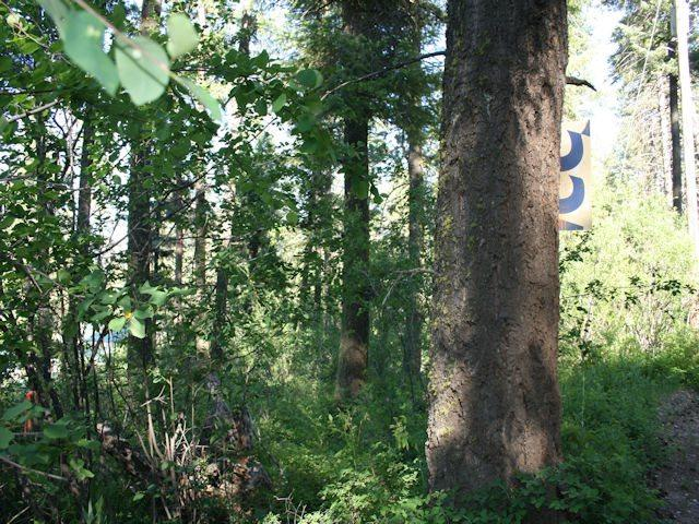 Lot 11 Valley View Height, Garden Valley, ID 83622 (MLS #98690377) :: Full Sail Real Estate