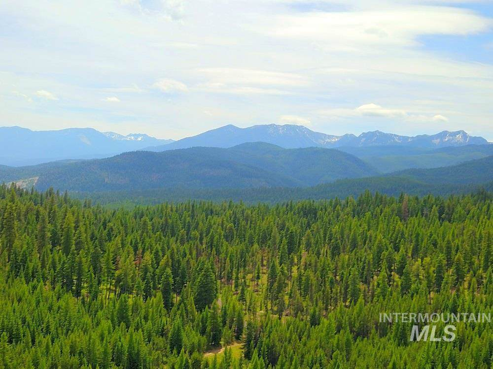 TBD National Forest Rd #4316 - Photo 1