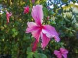 1100 Ponce De Leon Circle - Photo 19
