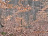 0 Harrison Ridge Road - Photo 5