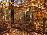 5844 & 5862 Wesley Ridge - Photo 12