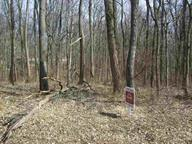 Lot 52 Parkeland Hills, Rockville, IN 47872 (MLS #21556666) :: Indy Plus Realty Group- Keller Williams