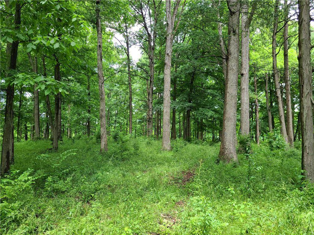 00 Mineral Springs Road - Photo 1