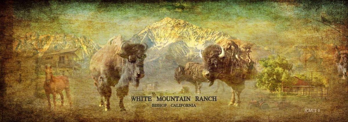 550 White Mountain Ranch Road - Photo 1