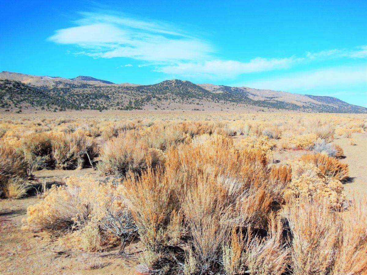 160 Acres Hwy 120 - Photo 1
