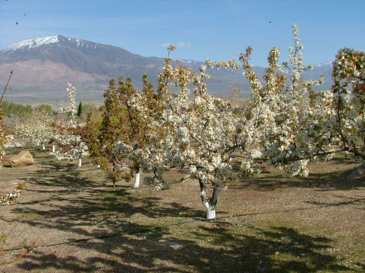 475 Sierra Grande - Photo 1