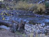 1710 Fall River Rd - Photo 10