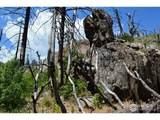 601 Whale Rock Rd - Photo 5