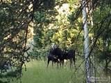 193 Bear Pl - Photo 1