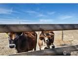 21614 County Road 15 - Photo 36