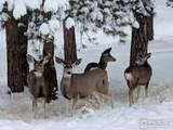 2215 Fox Acres Dr - Photo 18