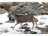 480 Manhead Mountain Dr - Photo 31