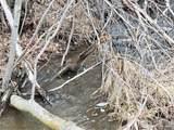 12024 Rist Canyon Rd - Photo 11