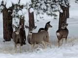 2641 Fox Acres Dr - Photo 10
