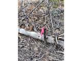 66 Blue Spruce Dr - Photo 10