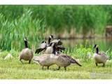 4451 Eagle Lake Dr - Photo 39