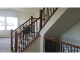 351 Seahorse Dr, Windsor, CO 80550 (MLS #820663) :: 8z Real Estate