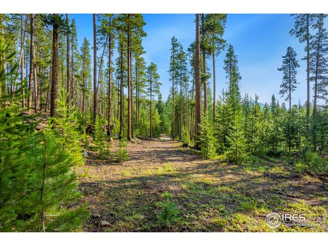 451 Shoshoni Dr, Red Feather Lakes, CO 80545 (MLS #947893) :: Tracy's Team