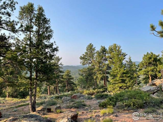 39 Chillicothe Ct, Red Feather Lakes, CO 80545 (MLS #948765) :: Stephanie Kolesar