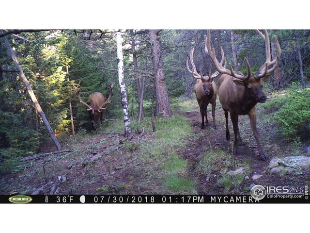 0 Hell Canyon Rd, Estes Park, CO 80517 (MLS #952912) :: RE/MAX Elevate Louisville