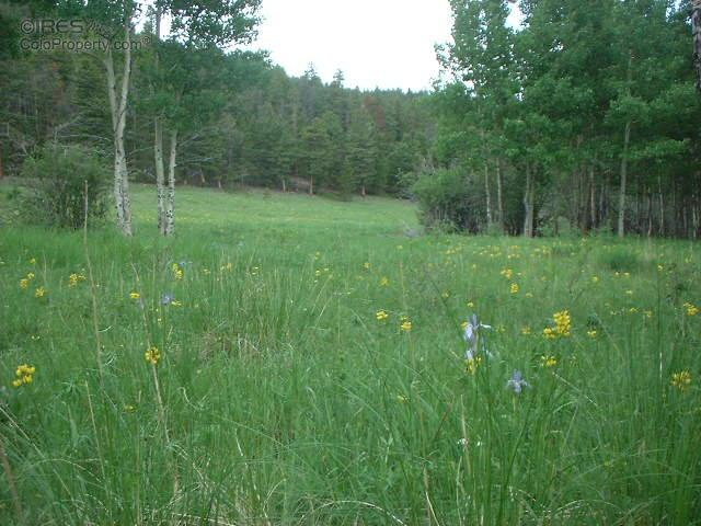 0 Monument Gulch Way, Bellvue, CO 80512 (MLS #806409) :: 8z Real Estate
