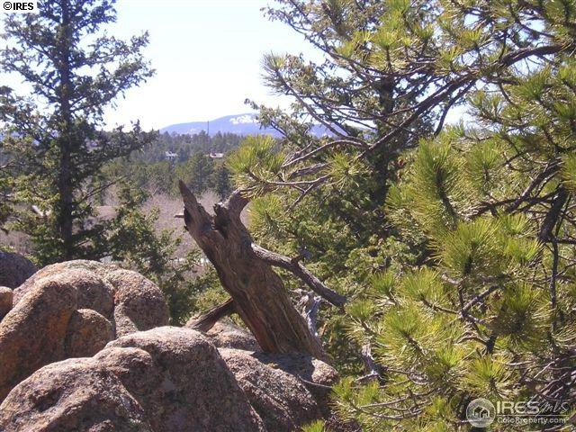 3084 Fox Acres Dr, Red Feather Lakes, CO 80545 (MLS #825778) :: 8z Real Estate