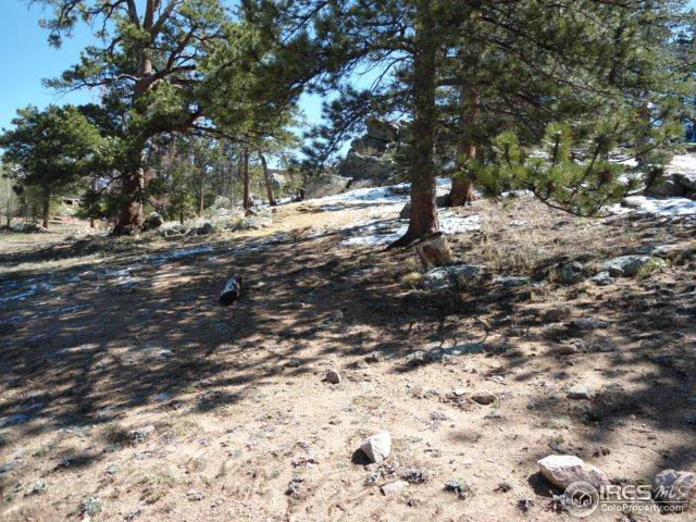 196 Shagwa Dr, Red Feather Lakes, CO 80545 (MLS #827805) :: 8z Real Estate