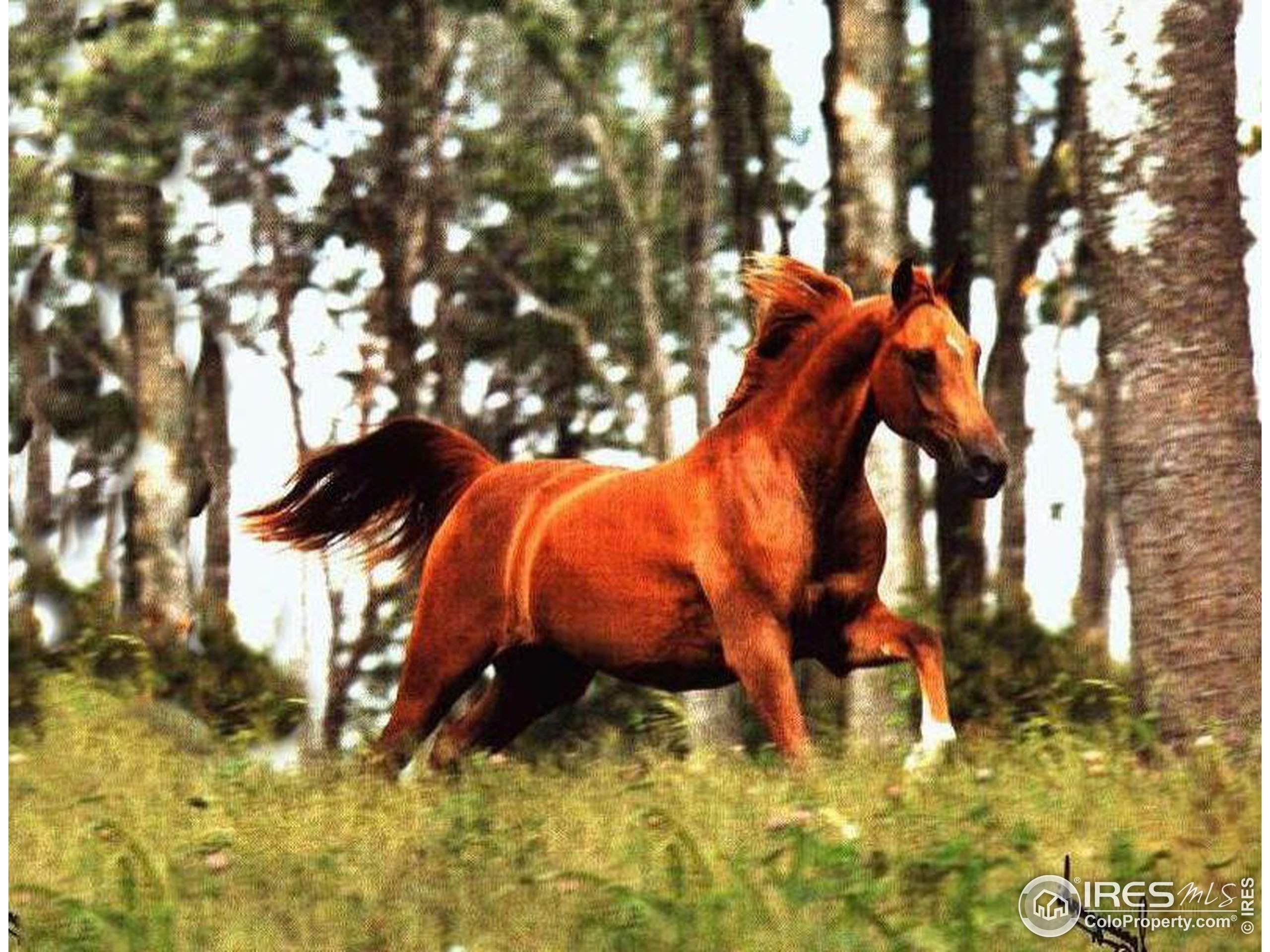 18126 W 83rd Dr, Arvada, CO 80007 (MLS #875461) :: Tracy's Team