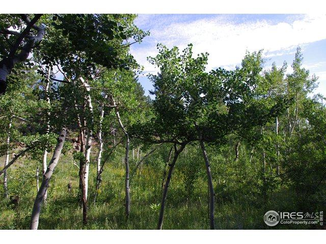 0 Columbine Dr, Red Feather Lakes, CO 80545 (MLS #876451) :: Kittle Real Estate
