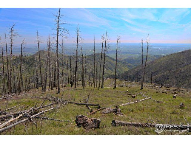 Address Not Published, Bellvue, CO 80512 (MLS #884412) :: Downtown Real Estate Partners