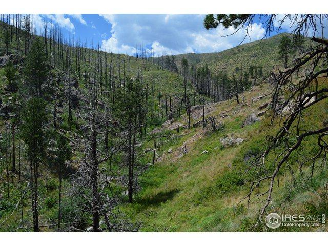 Whale Rock Rd, Bellvue, CO 80512 (#888653) :: James Crocker Team