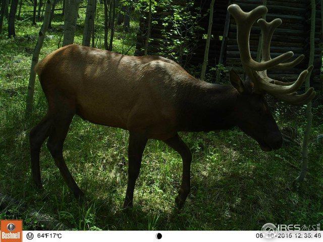 0 Twin Spruce Rd, Golden, CO 80403 (#888904) :: James Crocker Team