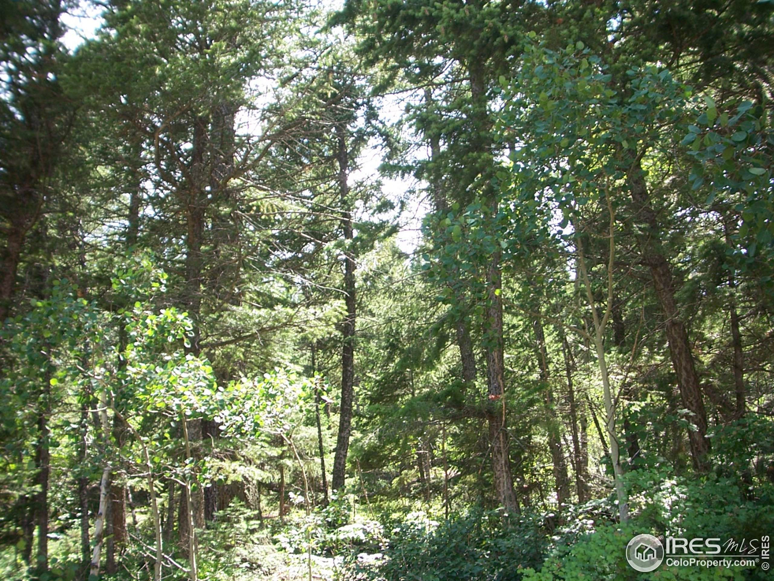 1548 Chambers Dr, Boulder, CO 80305 (#905517) :: The Brokerage Group