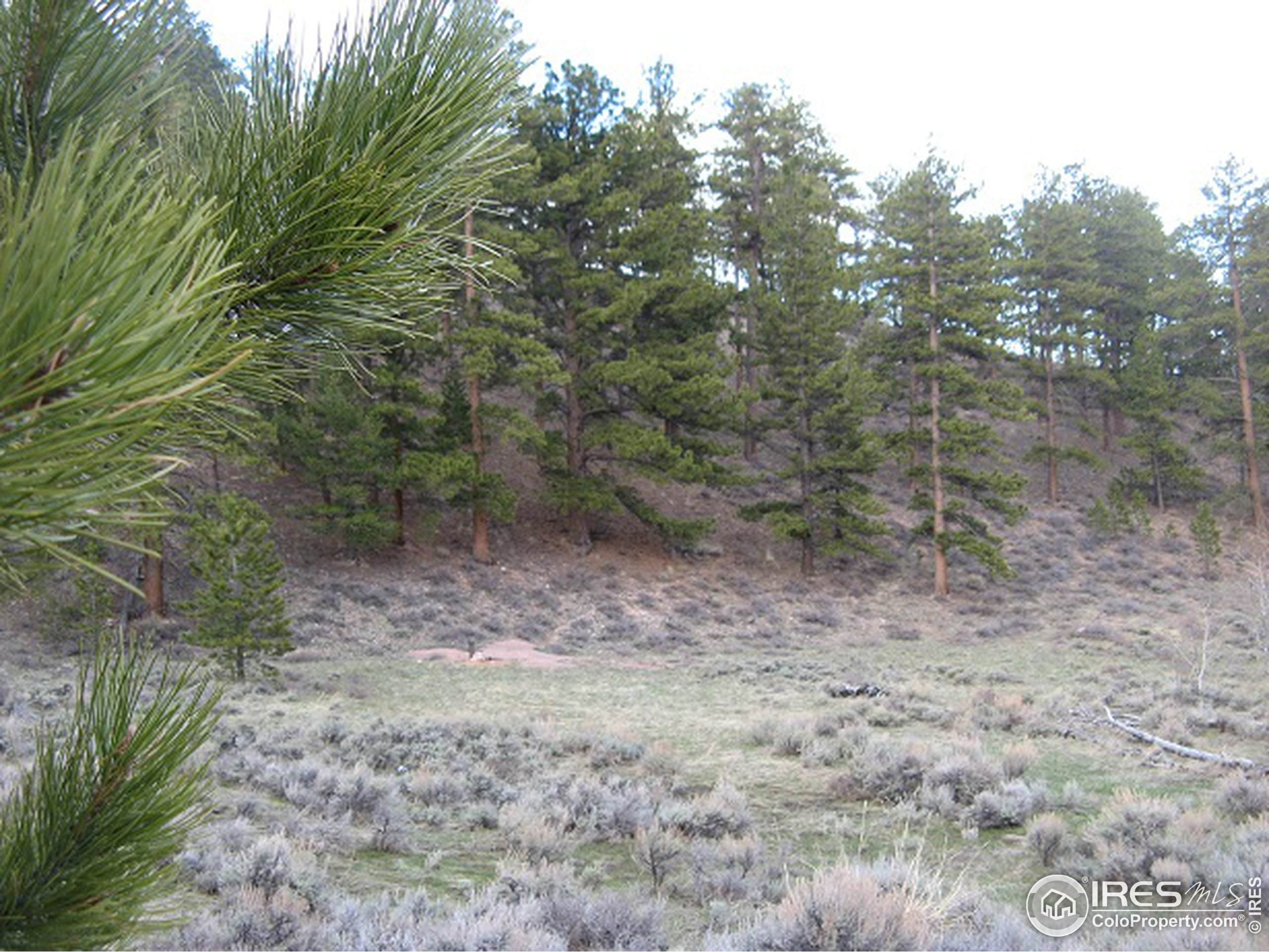 802 Saddlebrook Ln, Fort Collins, CO 80525 (#919524) :: Compass Colorado Realty