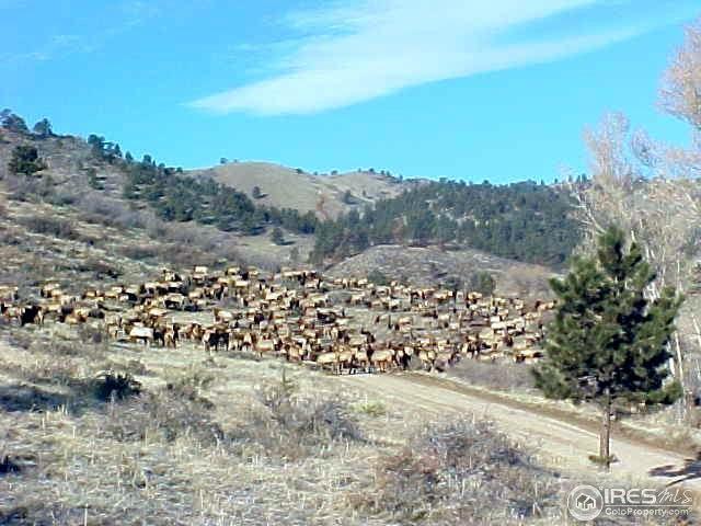 6 Blue Mountain Trl, Lyons, CO 80540 (MLS #829751) :: 8z Real Estate