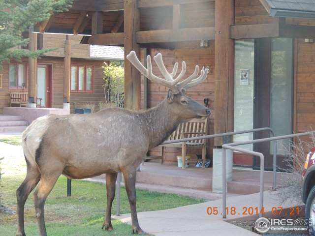 1565 Highway 66 #22, Estes Park, CO 80517 (MLS #906104) :: 8z Real Estate