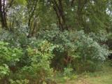 3198 Sr 119 - Photo 2