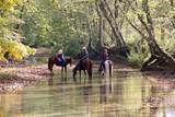 1264 Hunters Creek Road - Photo 8