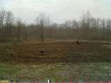 0 Kelly Branch Road - Photo 7