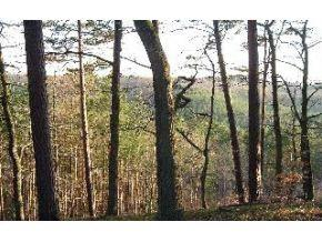 Lot 1 Iron Gate Trail, Bloomington, IN 47403 (MLS #201655185) :: Parker Team