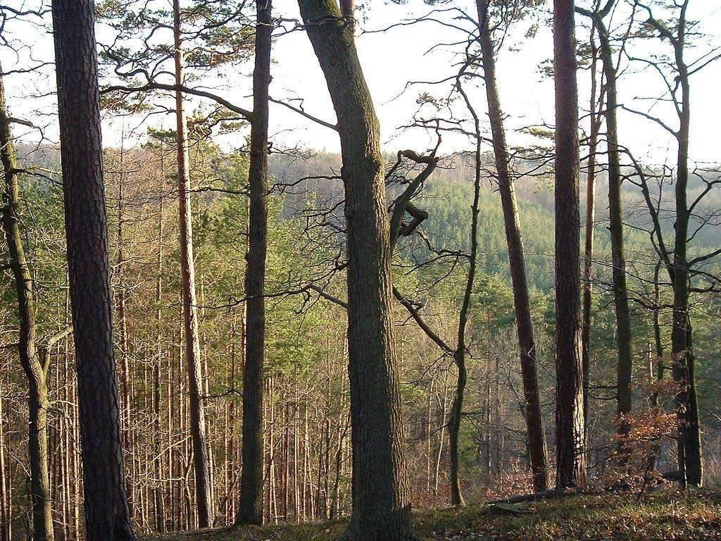 5047 Bridle Path Trail - Photo 1