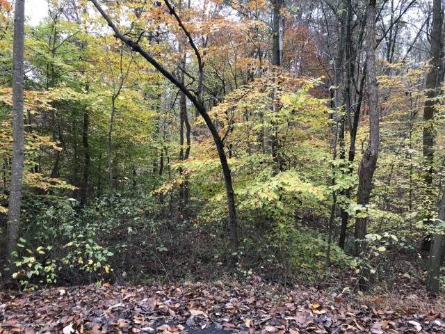 Lot 13 N Gramwood Drive, Celestine, IN 47521 (MLS #202043770) :: Parker Team