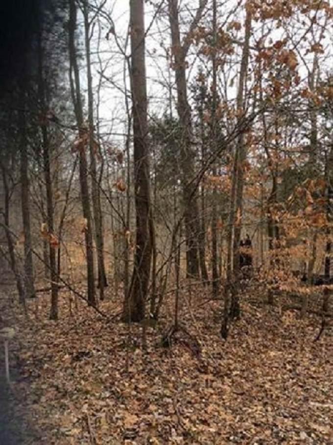 TBD Bluegrass Drive - Photo 1
