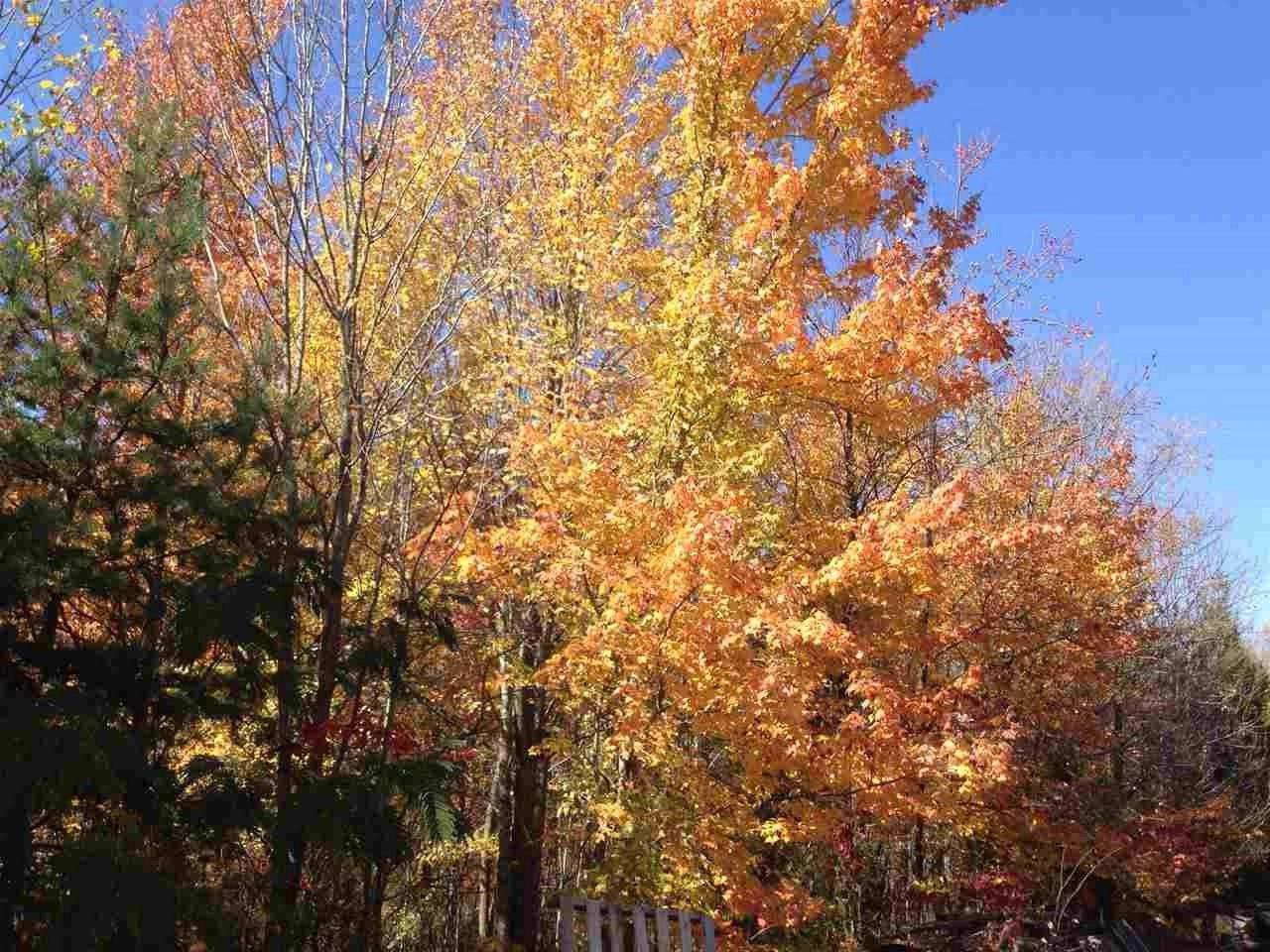 lot 6 Shamrock Shamrock Lane - Photo 1