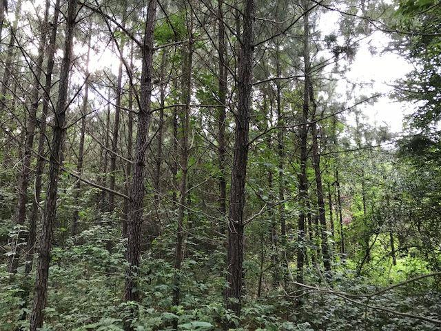 Old Hillsboro Rd, Forest, MS 39074 (MLS #319143) :: RE/MAX Alliance